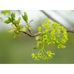 Bloem | Voorjaar