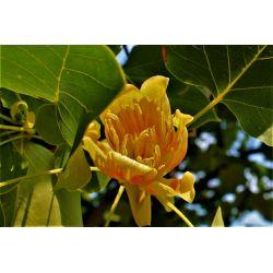 Bloemen (juli)