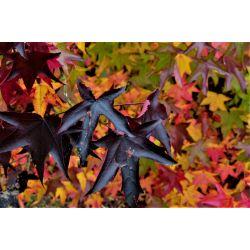 Blad herfst