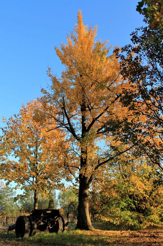 Late herfst.