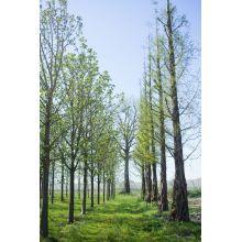 Bijzondere boom kopen? Bekijk onze volwassen bomen op Brienissen.nl